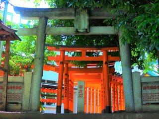 The Torii of Toyosaka Inari Shrine