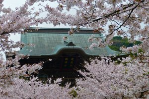 Roof of San-mon Gate, surrounded by cherry blossoms