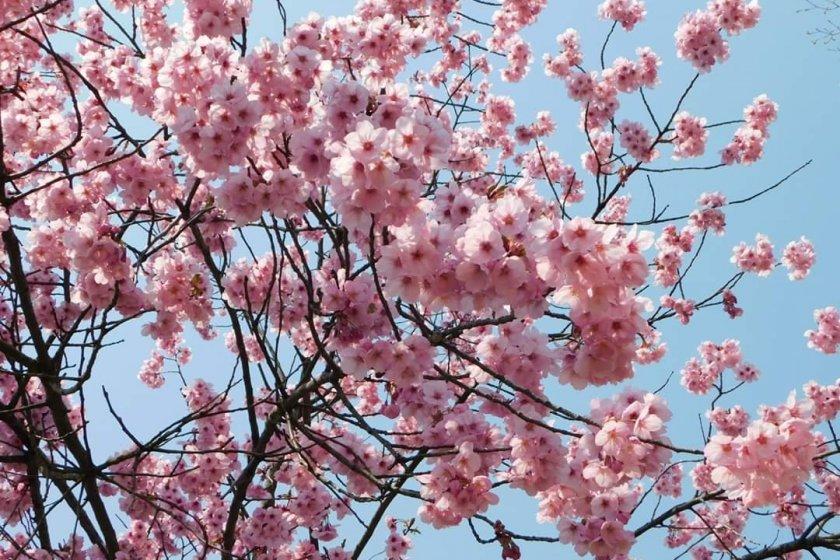 Springtime beauty, minus the crowds