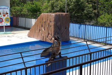 A sea lion performs at Dolphin Island