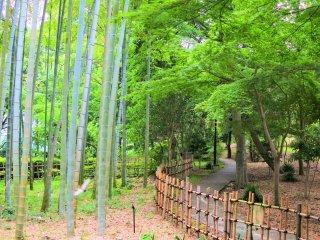 風情ある竹林の景色