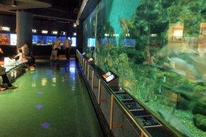 The 200 Tonne central tank at Hekinan Aquarium