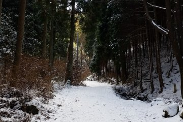 The main trail leading from the Ropeway bus stop