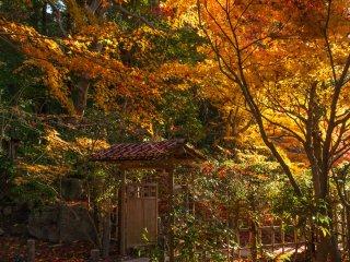 Миновав ворота из почерневшей древесины, попадаешь в осеннюю сказку