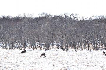 Hokkaido's Notsuke Peninsula in Winter