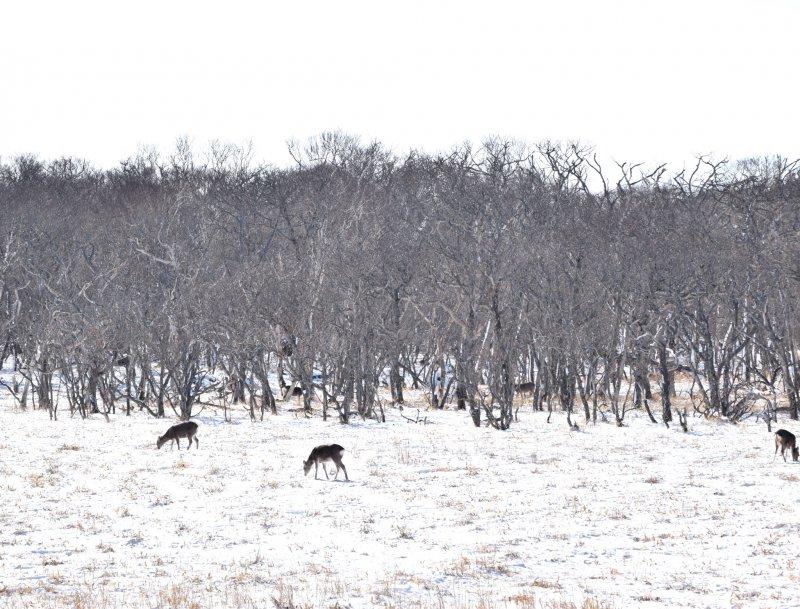 The winter landscape on the Notsuke Peninsula is like nothing else