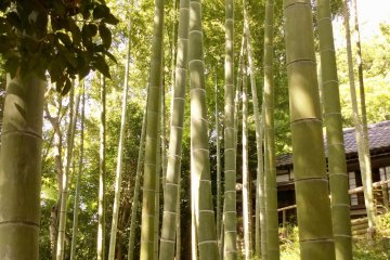 A bamboo grove meets you on the cobbled steps up to the house
