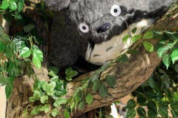 Totoro plush toy at Donguri Republic