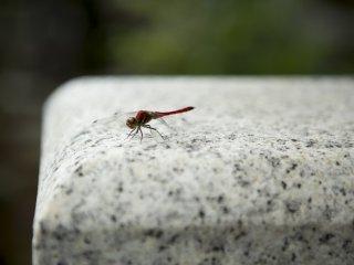 Các khu vực đầy động vật hoang dã và ở đây một con chuồn chuồn đang nằm trên một ngôi mộ dưới ánh mặt trời ấm áp.