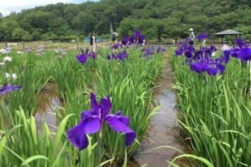 Higashimurayama City - Parks & Gardens