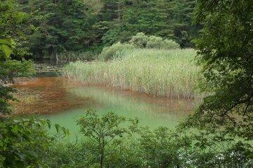 One of the lakes at Goshiki Numa