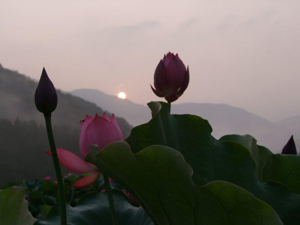 Matahari terlihat di area setelah pukul 6 pagi