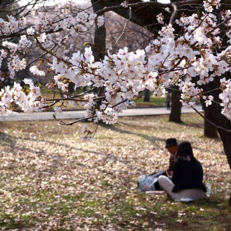 Koganei City - Parks & Gardens