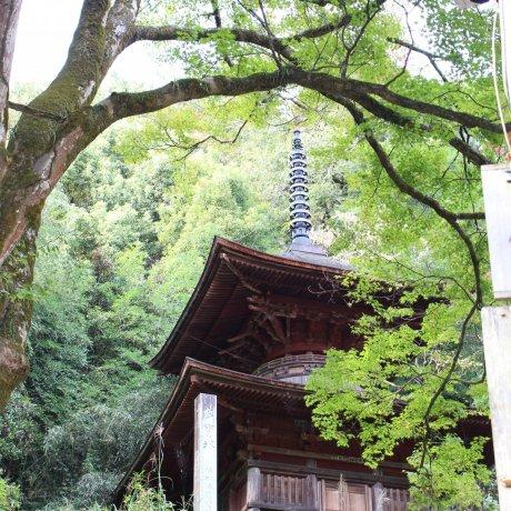 New Year at Kanasana Shrine