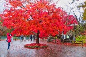Entrance to Goshiki-numa trail