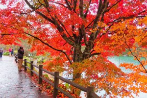 Fall colors at Bishamonnuma Pond