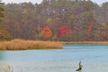 Fall colors at Bentenuma Pond