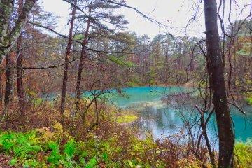 Emerald green color at Rurinuma Pond