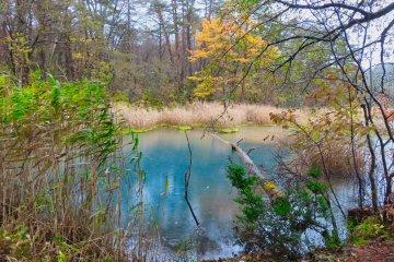 Blue Aonuma Pond