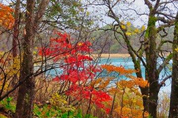 Aonuma Pond fall colors