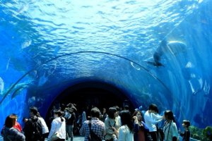 走入八景岛水族馆的海底奇观