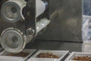Proses pembuatan natto di pabrik Tengu Natto