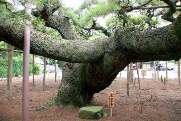 Edogawa City Ward - Temples & Shrines
