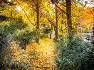 leaf coated paths
