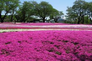 Tobu Treasure Garden, Tatebayashi, Gunma