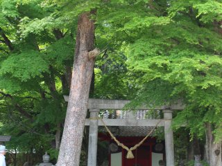 There are several things you can see for free too, such as the farm's shrine.