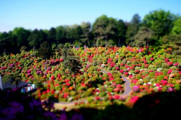 5 Bucket-List Worthy Flower Festivals in Japan