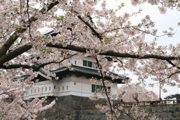 Hirosaki Castle is famous for its cherry blossoms