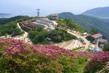 Azaleas at Mount Ohira