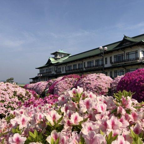 Gamagori Classic Hotel's Azalea Festival