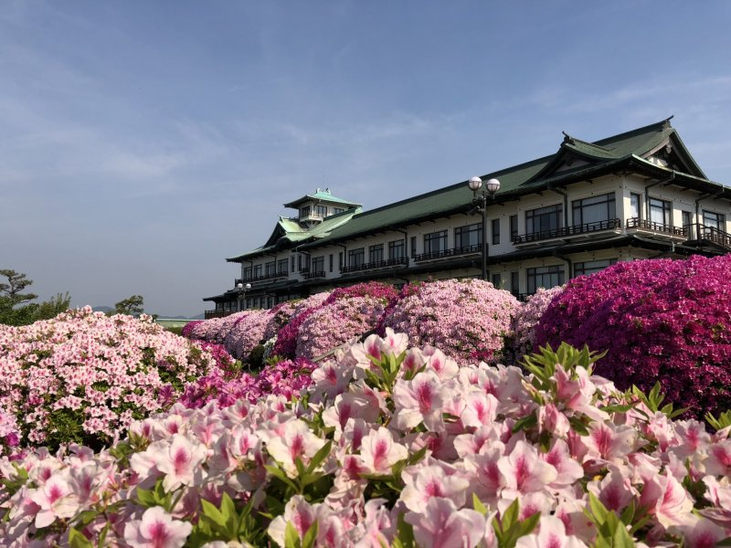 Beautiful azaleas at the Gamagori Classic Hotel