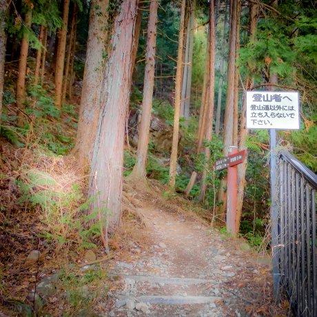 Hiking Tokyo's Mount Takamizu