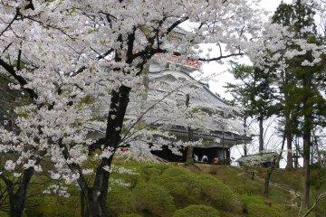 Senshu Park Sakura Festival