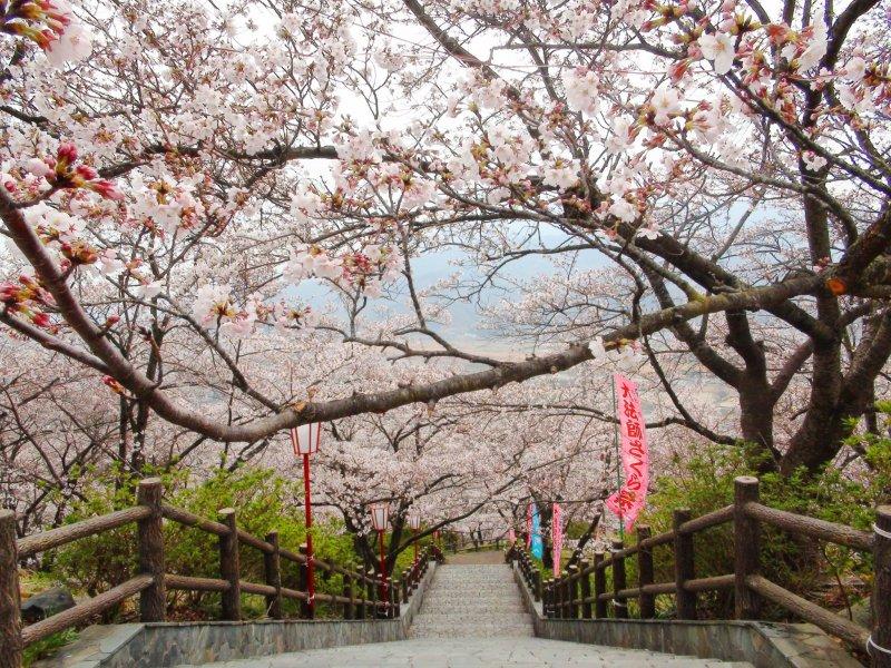 Spectacular scenery at Oboshi Park