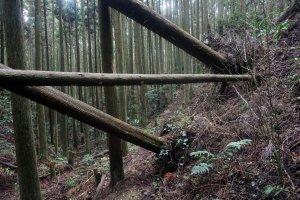 倒塌的树木阻挡了通往17号经冢的道路