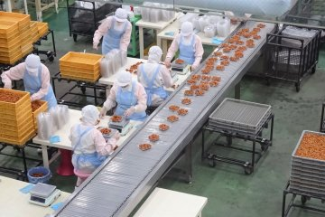 A visit to Nakata Food's factory, seen from behind a window