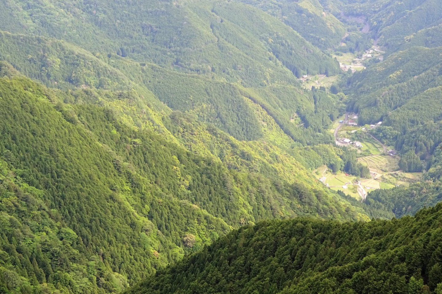 The Kii Peninsula is covered in forest as far as you can see