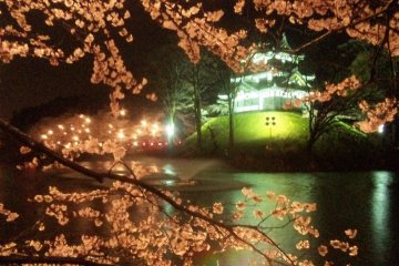 Takada Castle at night during sakura season