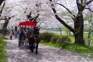 Kitakami Tenshochi Park, Iwate