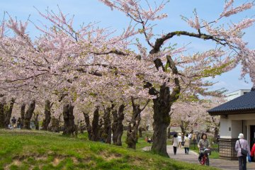 Trees at the Goryokaku