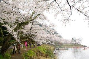 Spring's beauty in Shiga