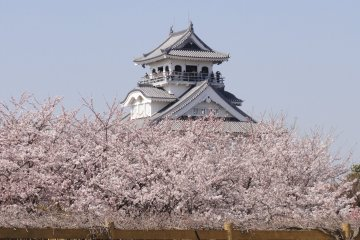 Sakura Season at Hokoen and Nagahama Castle