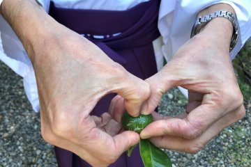 The shrine priest shows us a fruit from the Tachibana tree.