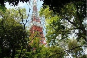芝公园窥视东京铁塔