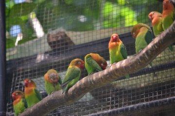 Birdlife abounds at Hamura Zoo