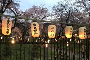 Cherry Blossom Festival at Hirano Shrine